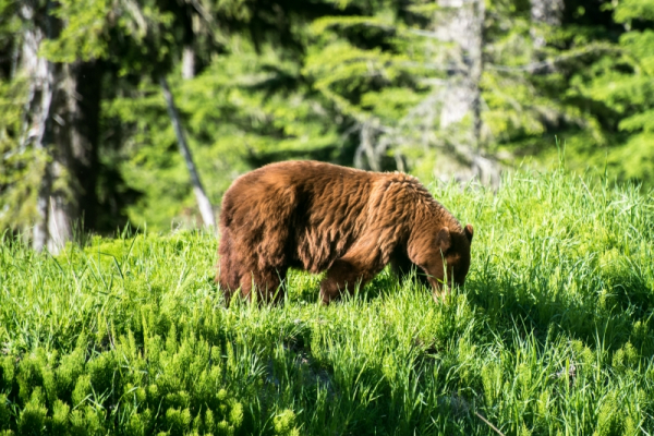 Bear Whistler-2153juni 20, 20162153